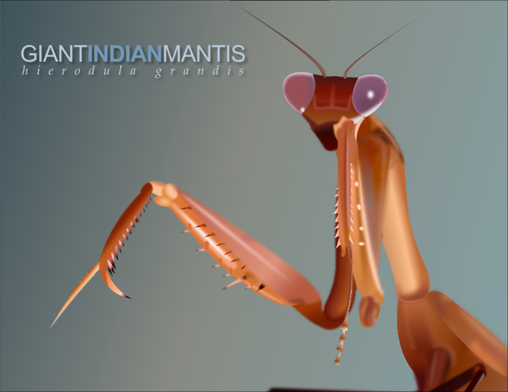 Giant Indian Mantis