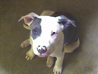 Tyson my dog