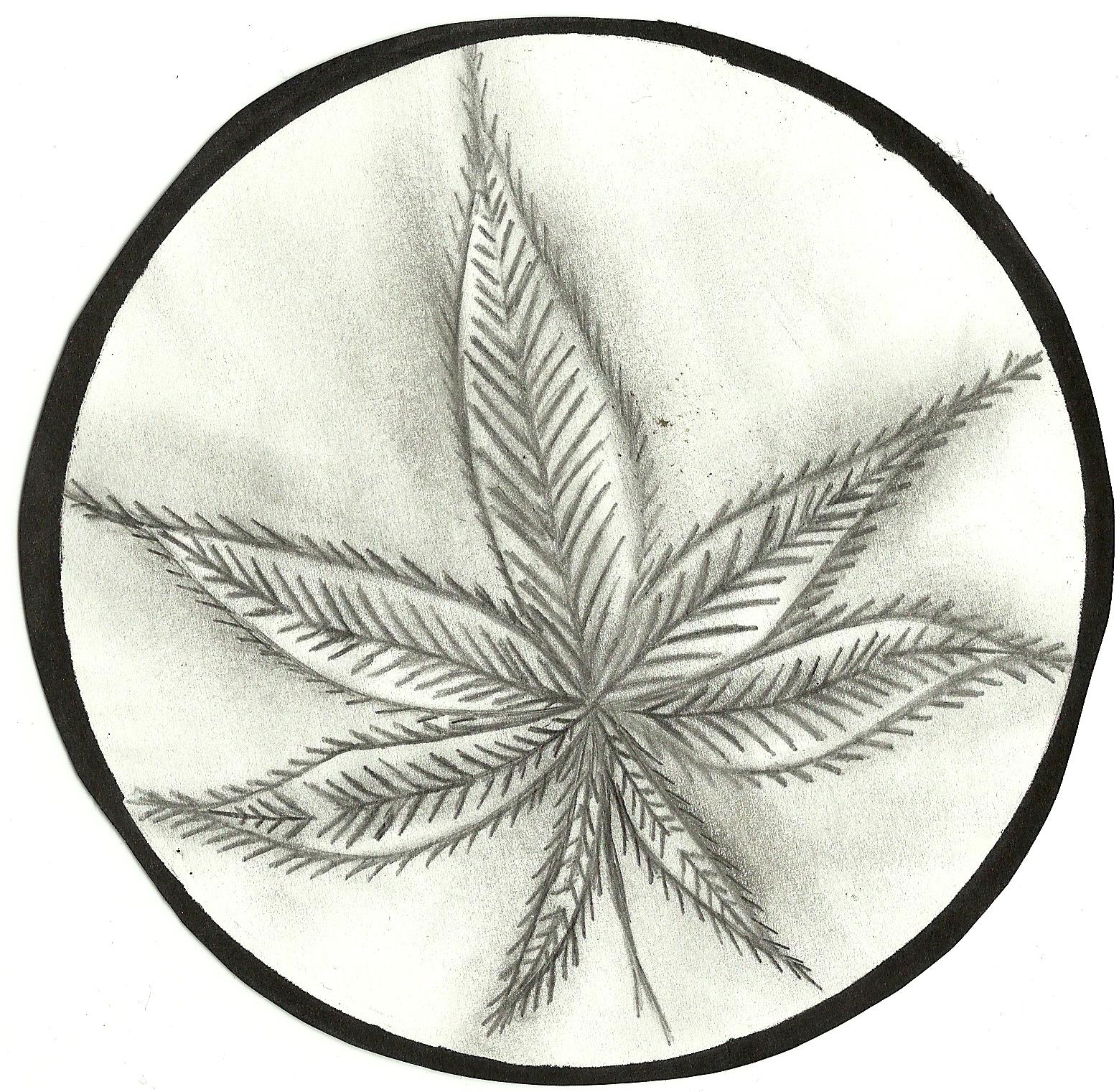 marijuna leaf