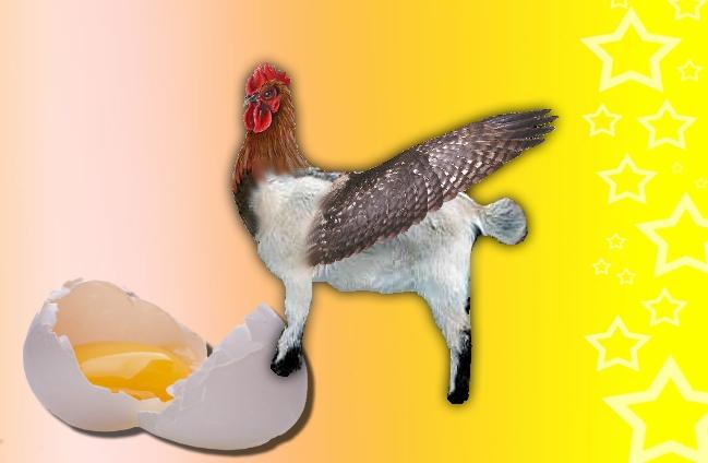 Chicken-Goat