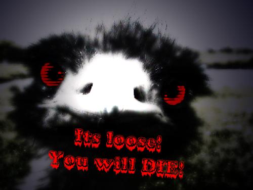 Evil Emu