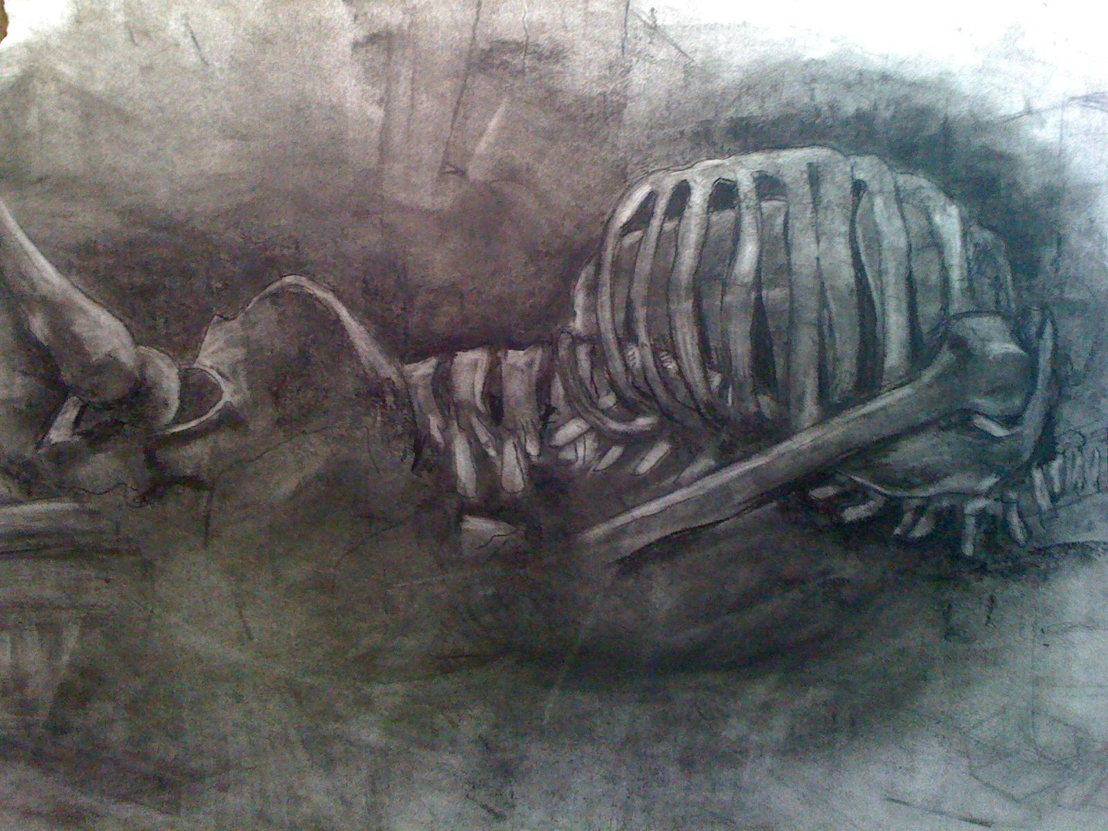 skeletal study 2