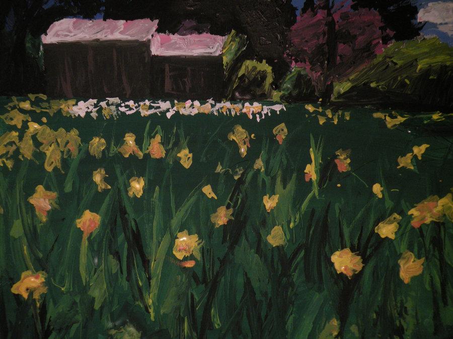 Daffodil Hills