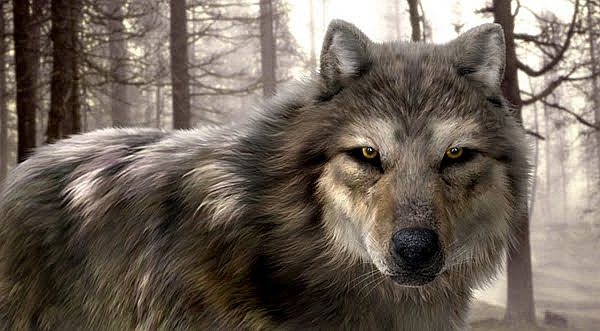 Detailed Wolf