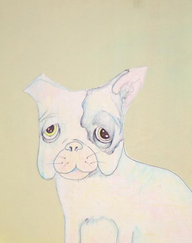 Sick little Boston Terrier