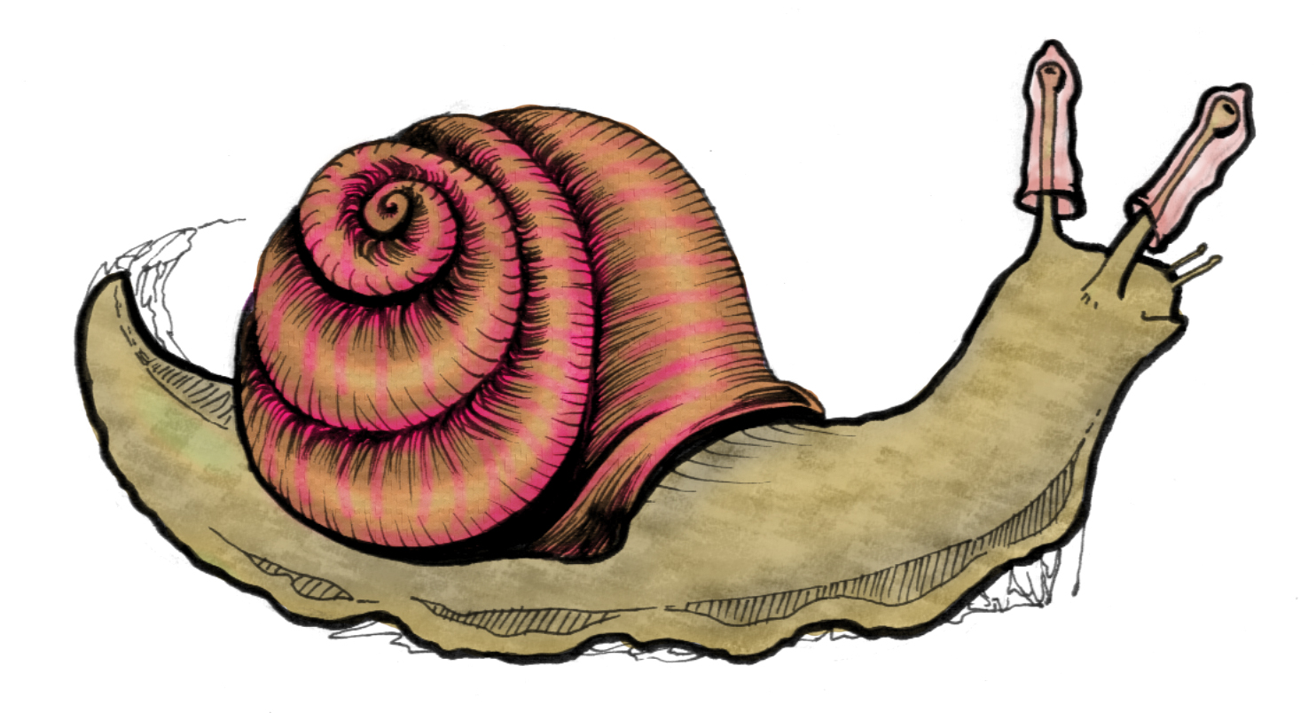 Safe Sex Snail