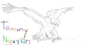 Eagle Lies