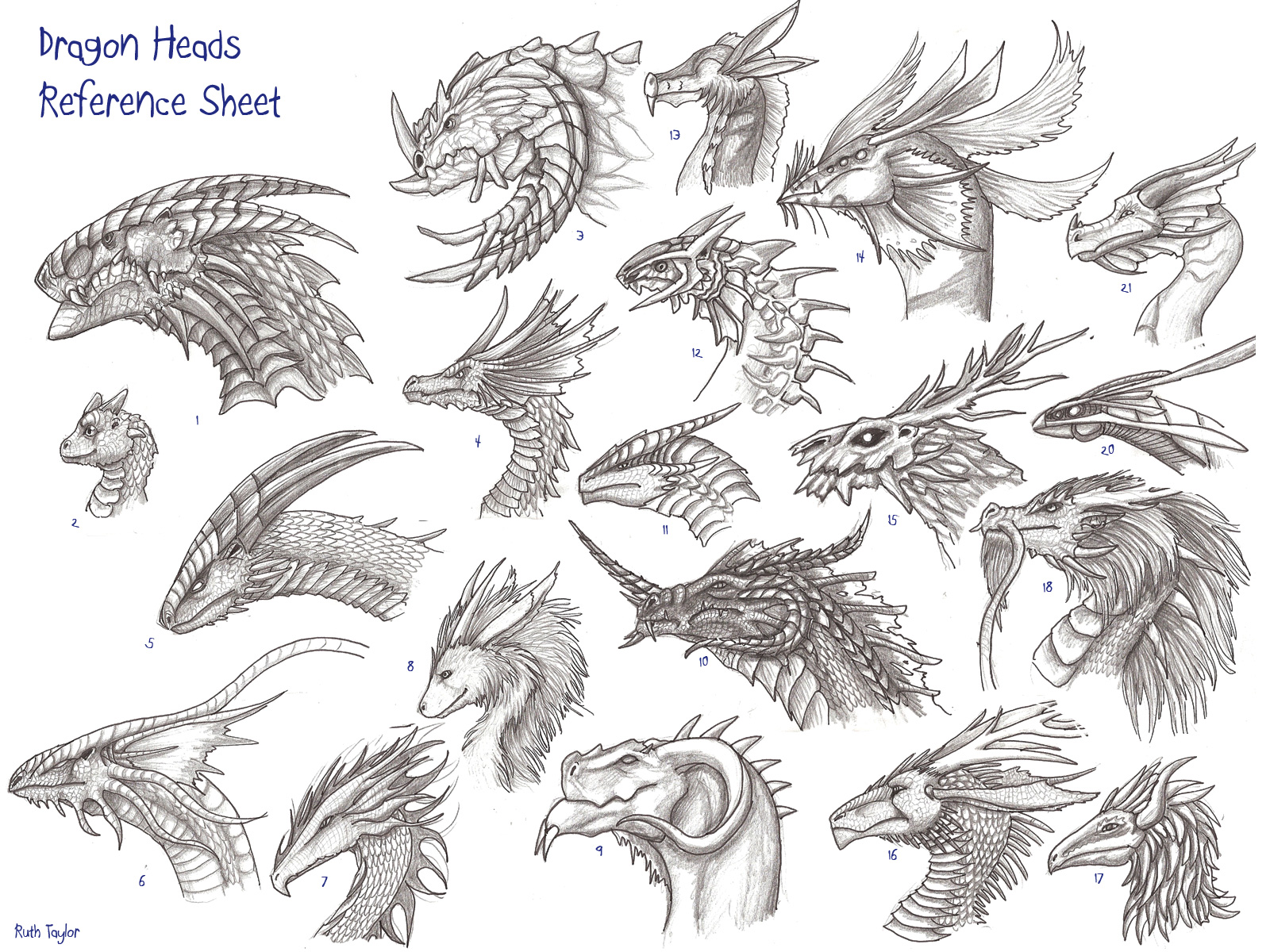 Dragon heads reference sheet