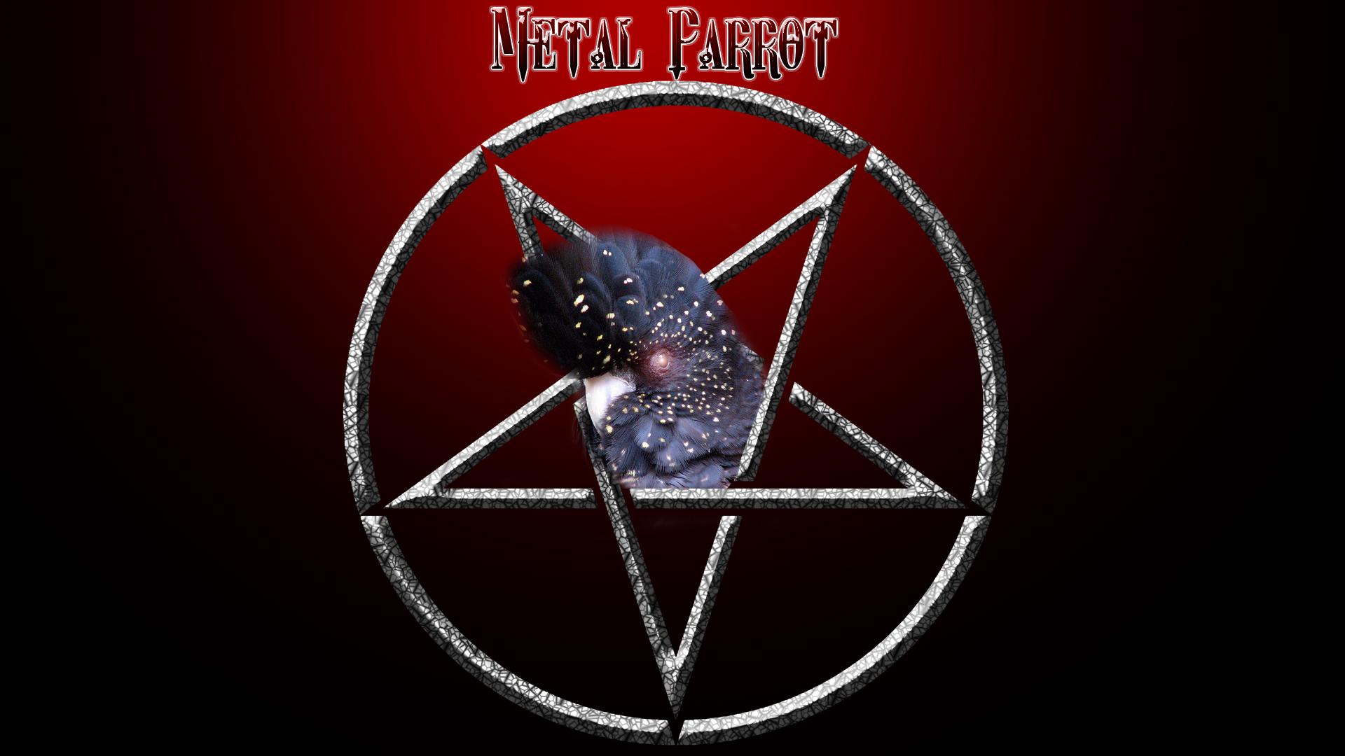 The Metal Parrot!