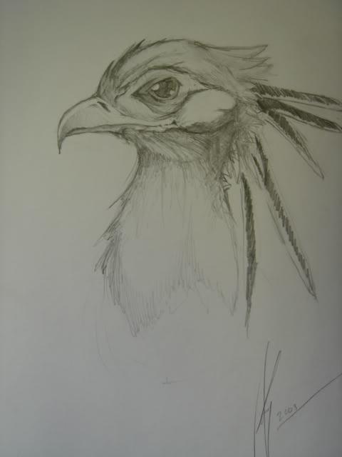 Bird Sketch #2