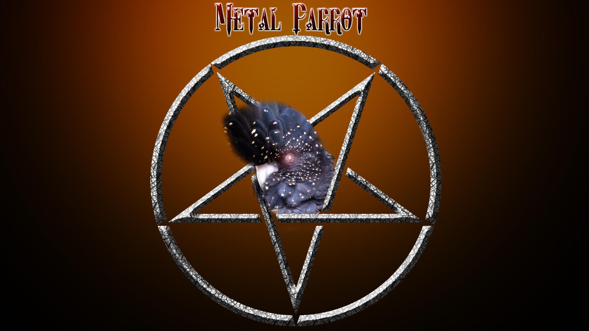 The Metal Parrot Orange!