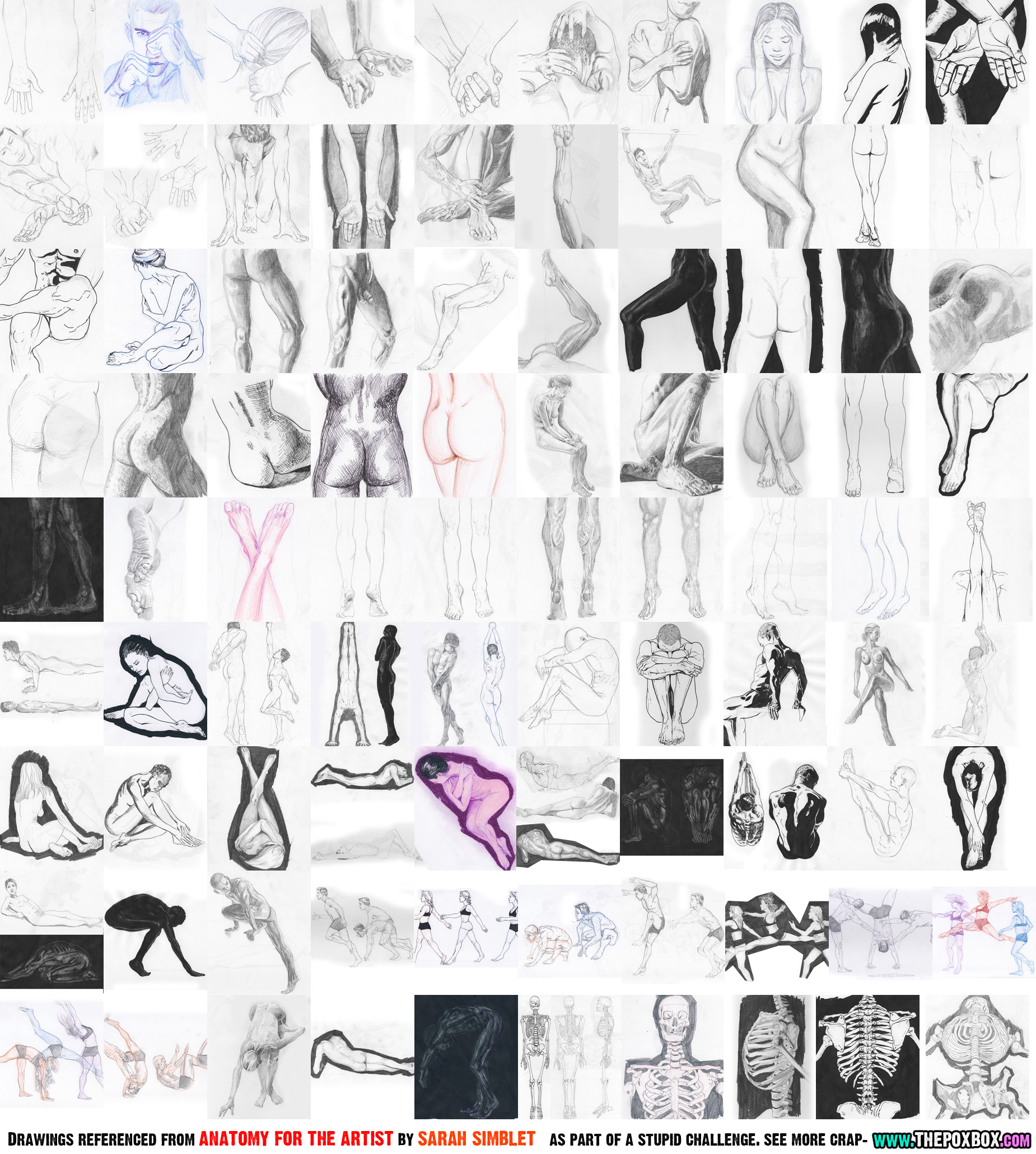 Anatomy Challenge part 2
