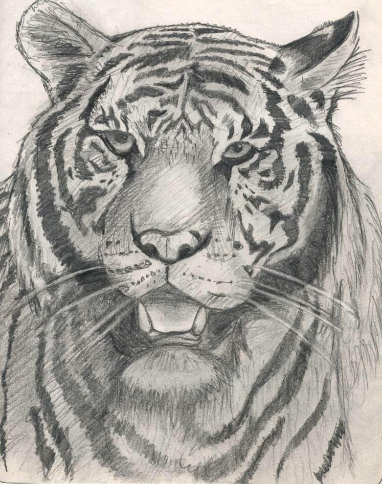 walking tiger