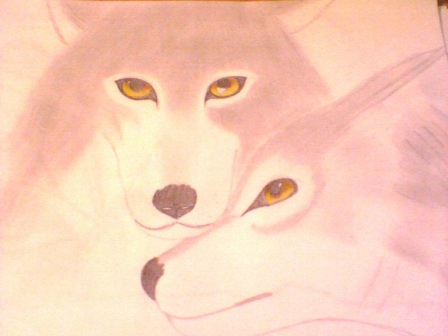 beautiful wolfs