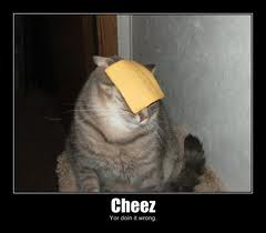 Just cheez on cat. move along