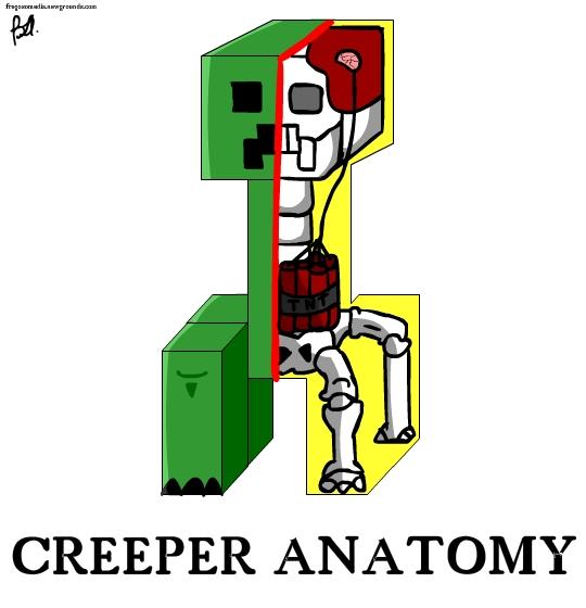 Creeper's Anatomy