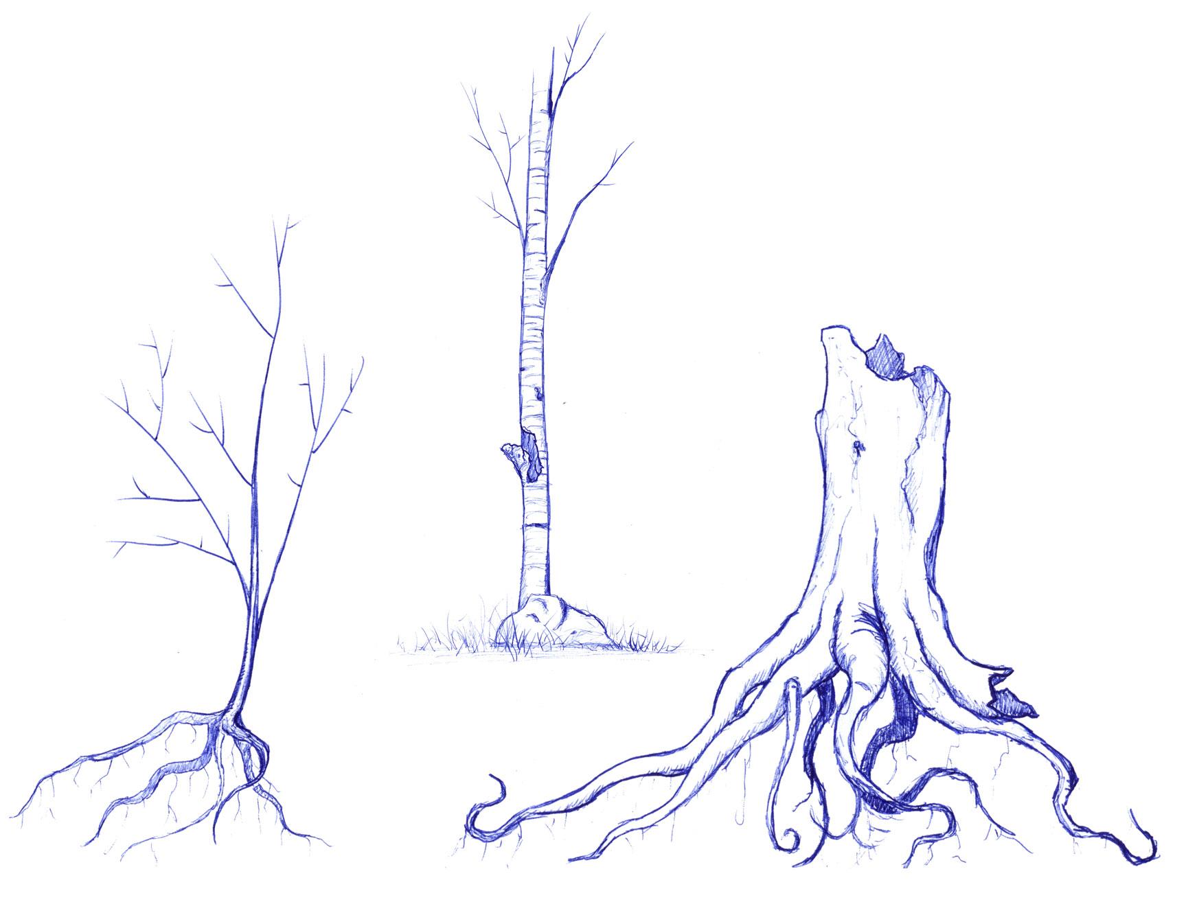 Tree Study & Exploration