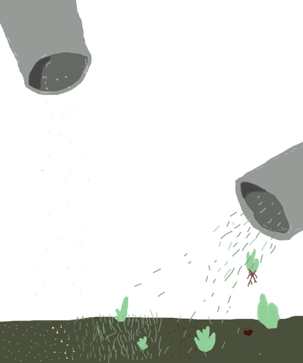 seed shoot