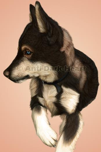 Togo Pup