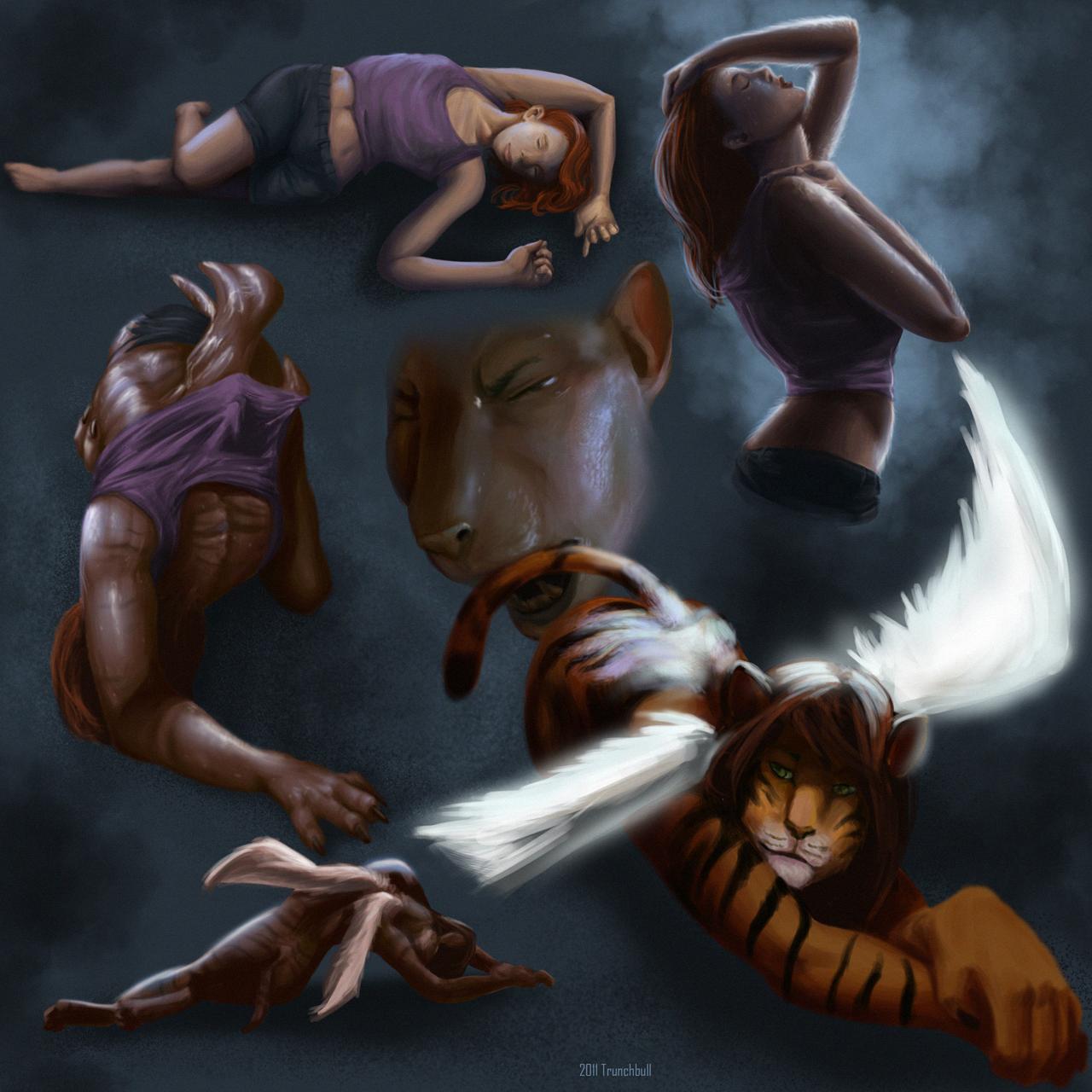 Tiger TF