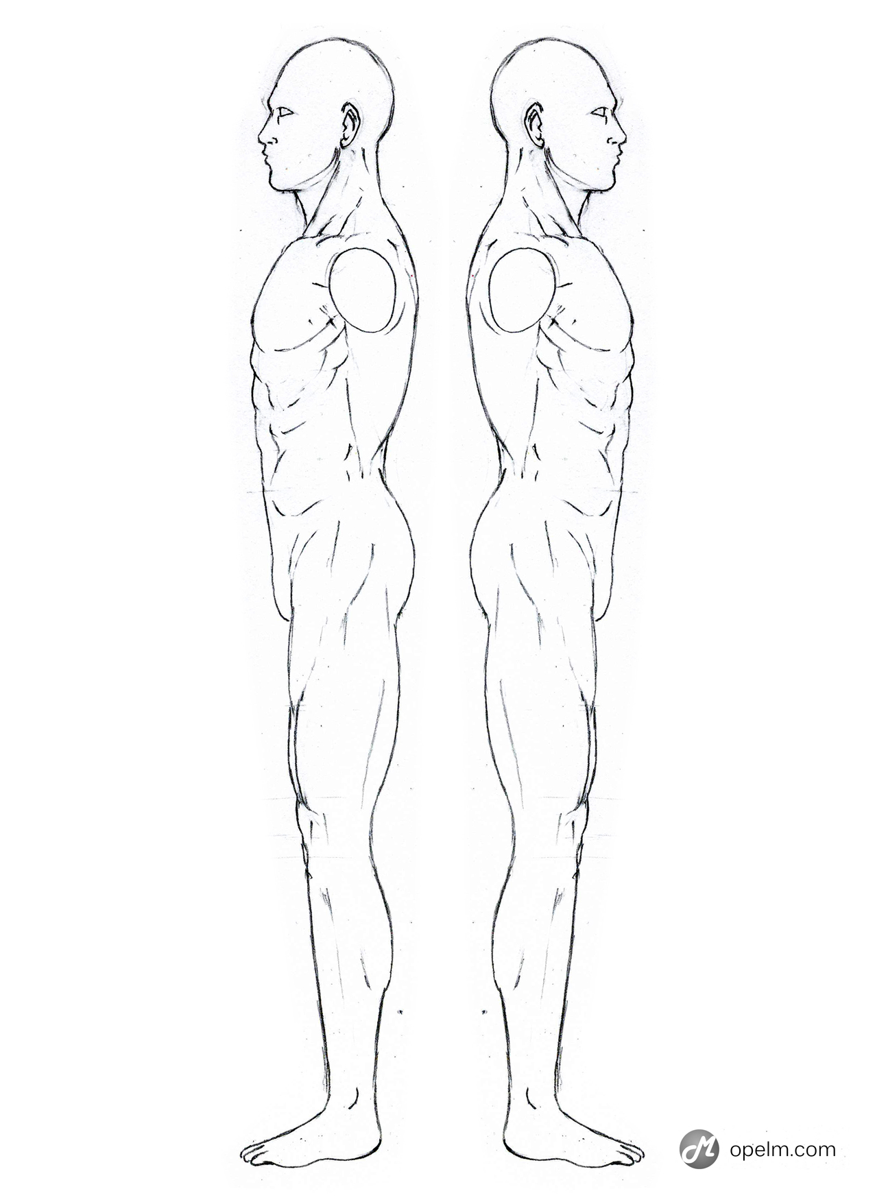 Male Anatomy Side Reference