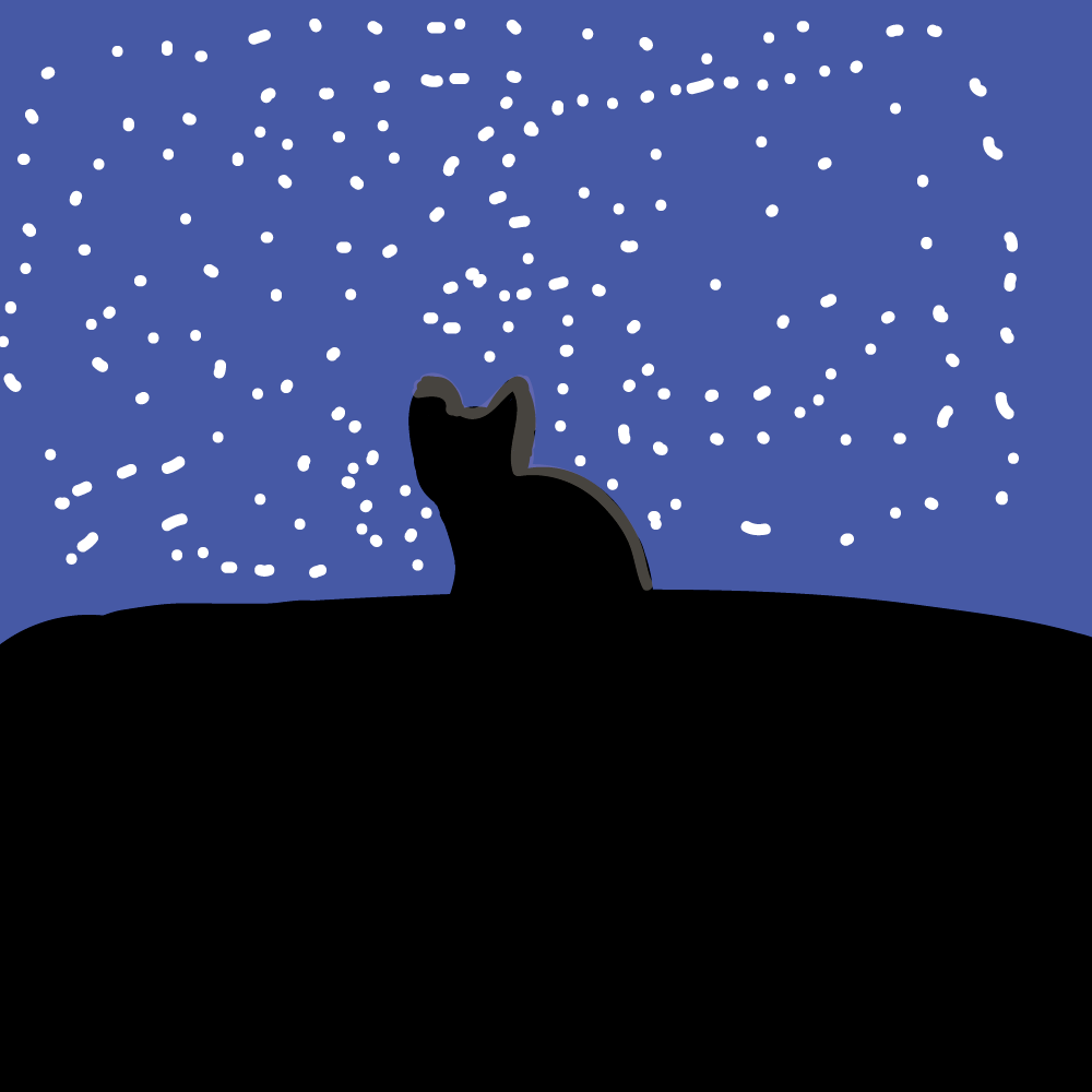Night cat