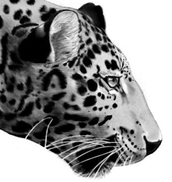 Realist leopard try