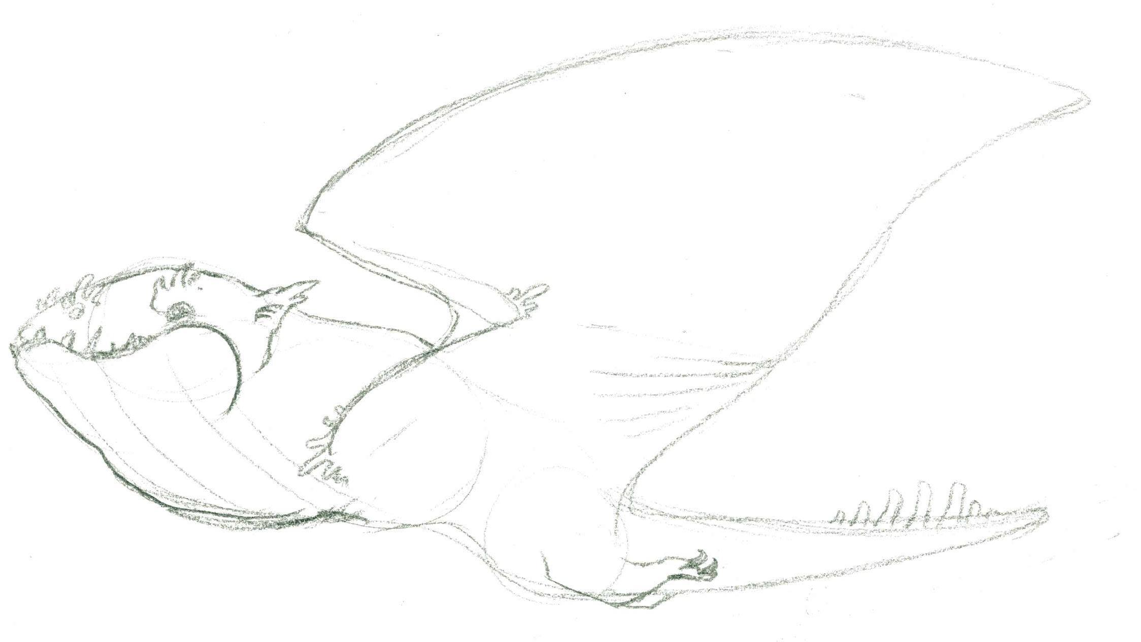 Skywhale Sketch