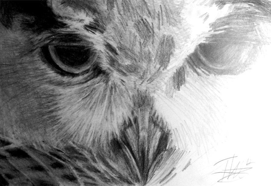 Half-Sketch Owl