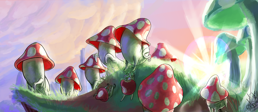 the colony of mushrooms
