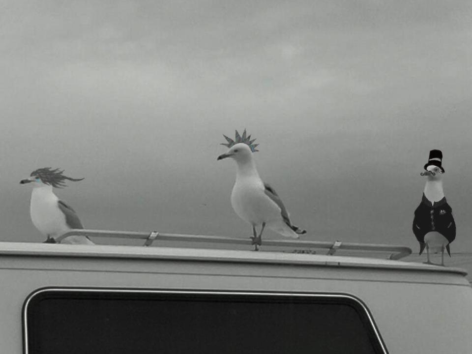 seagulls hitch a ride