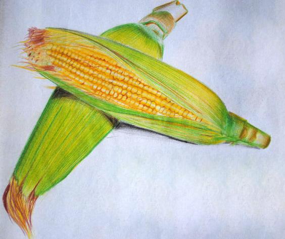 corn- pencil color on paper