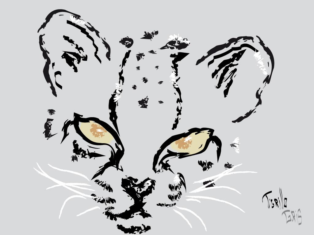 Tigrillo gris