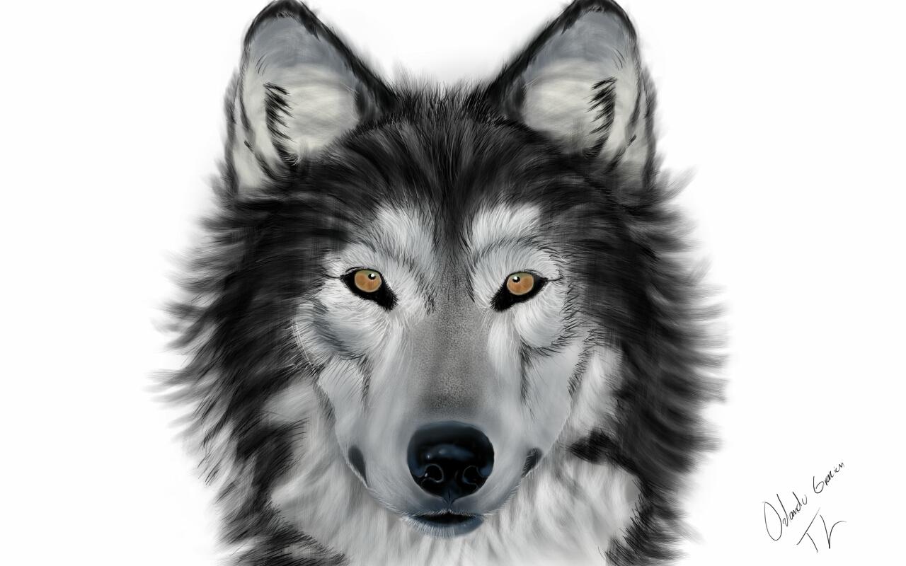 bad bad wolf