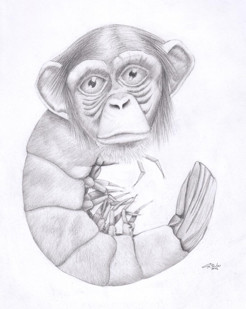 Shrimpanzee