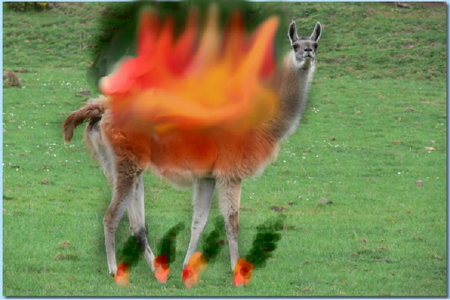 25382_armydillo1_fir-llama.jpg