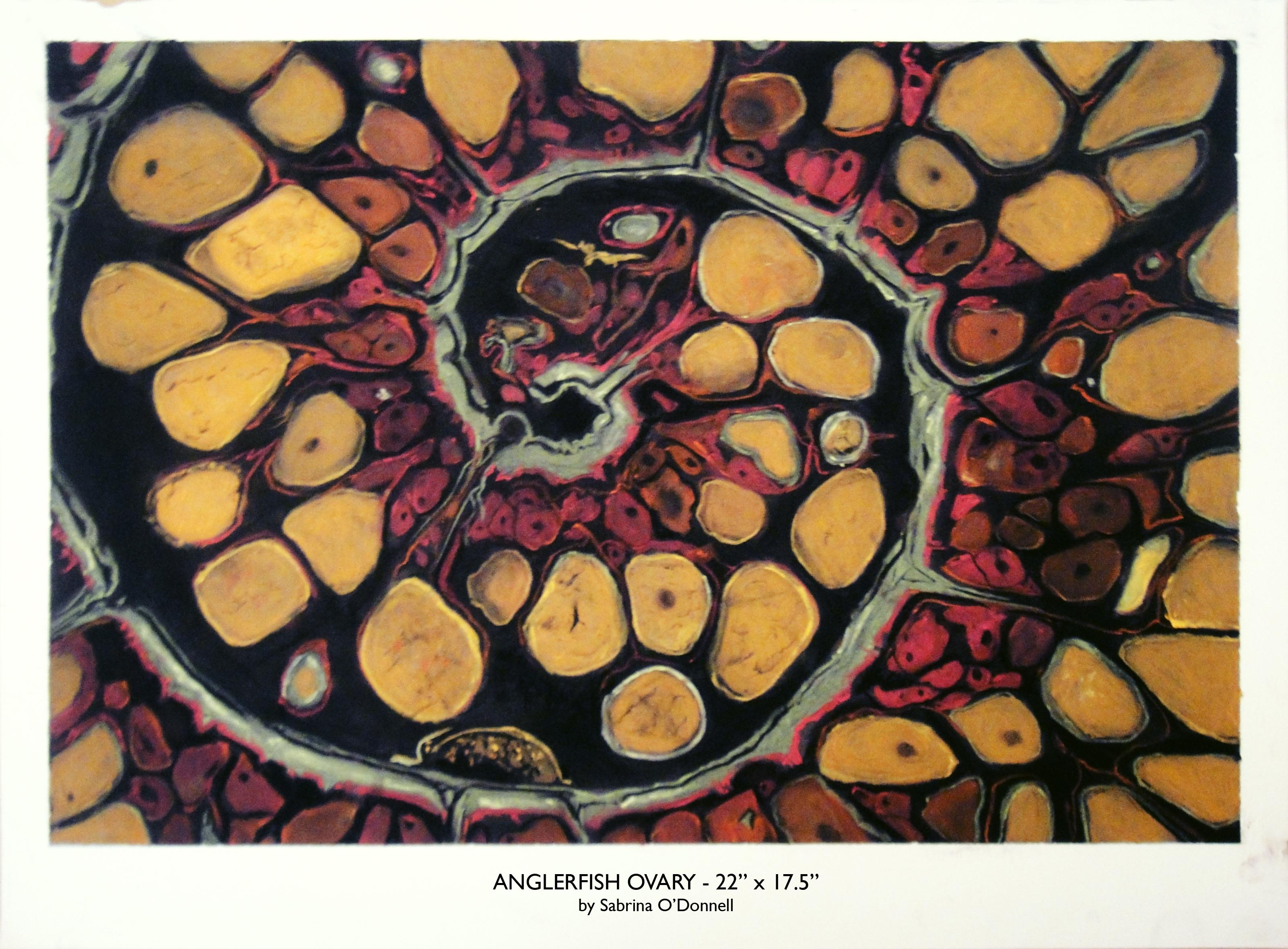 Anglerfish Ovary