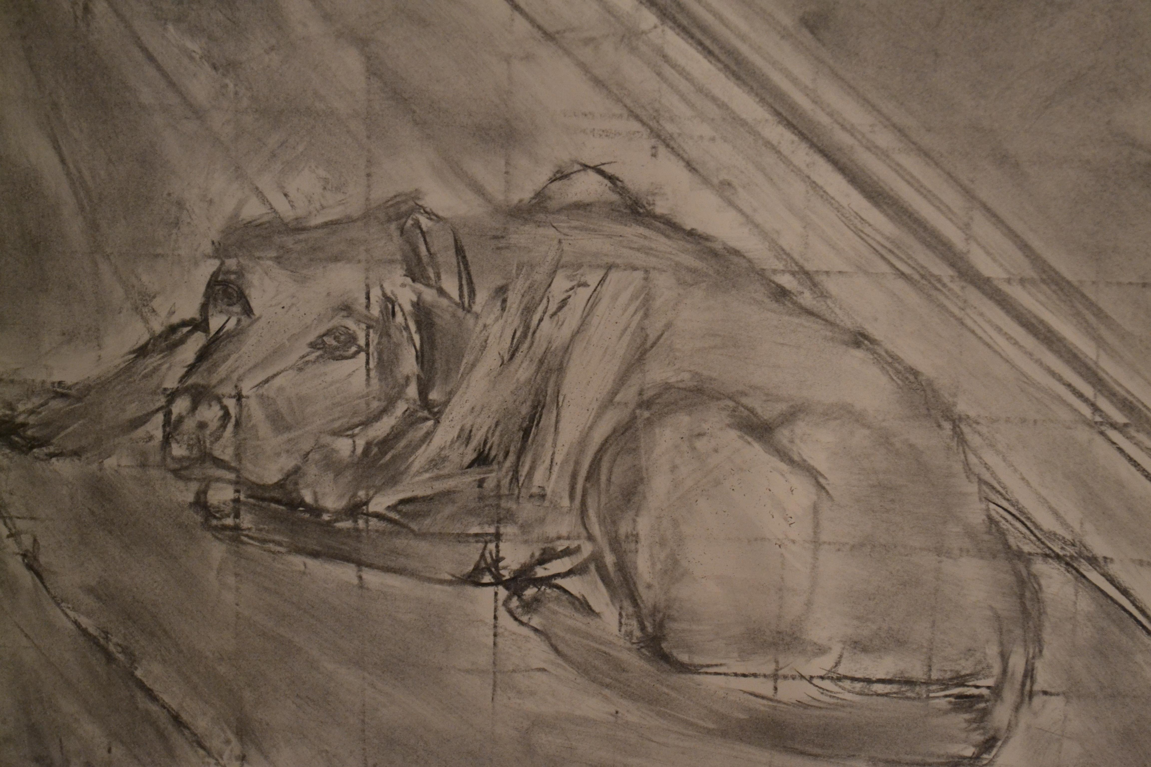 My Dog Chester