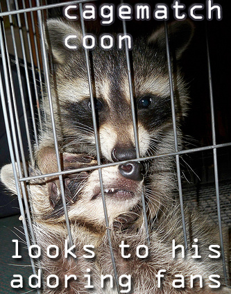 Wraccoon resslin'