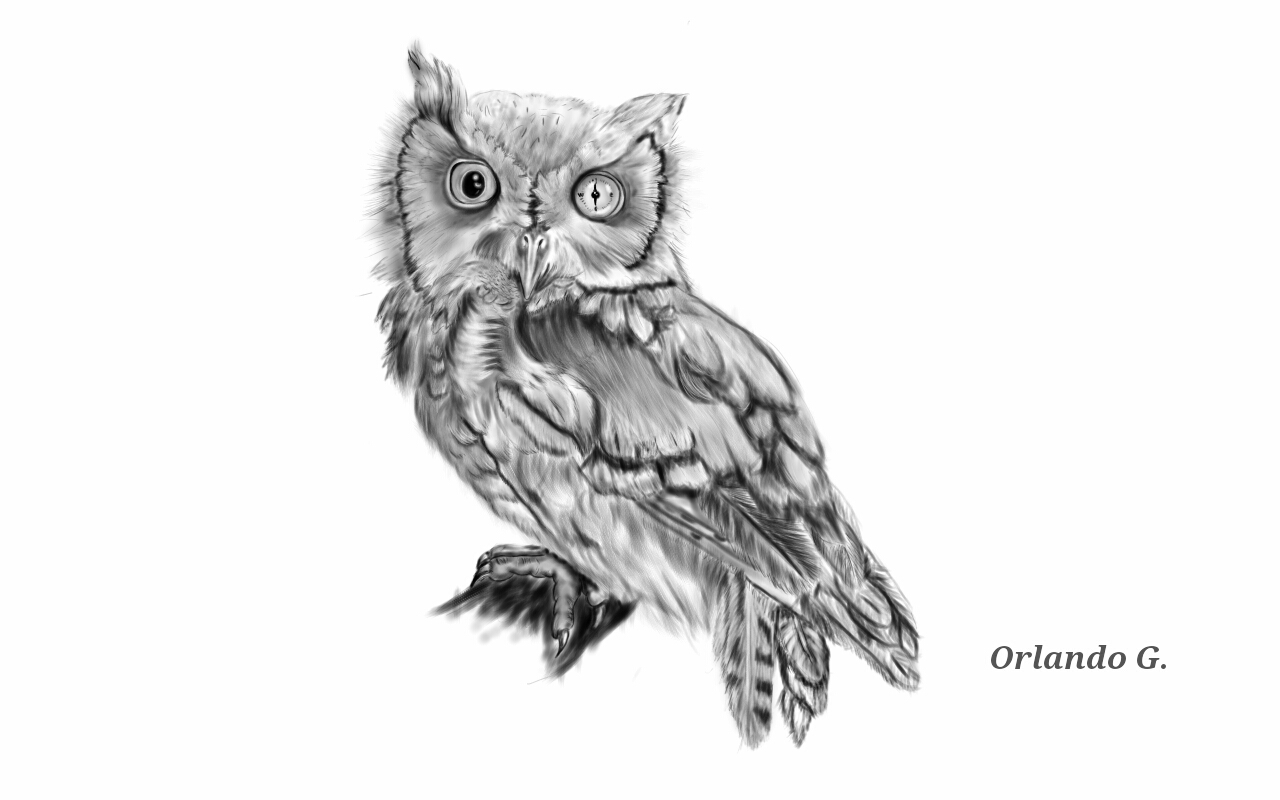 Owl tattoo concept