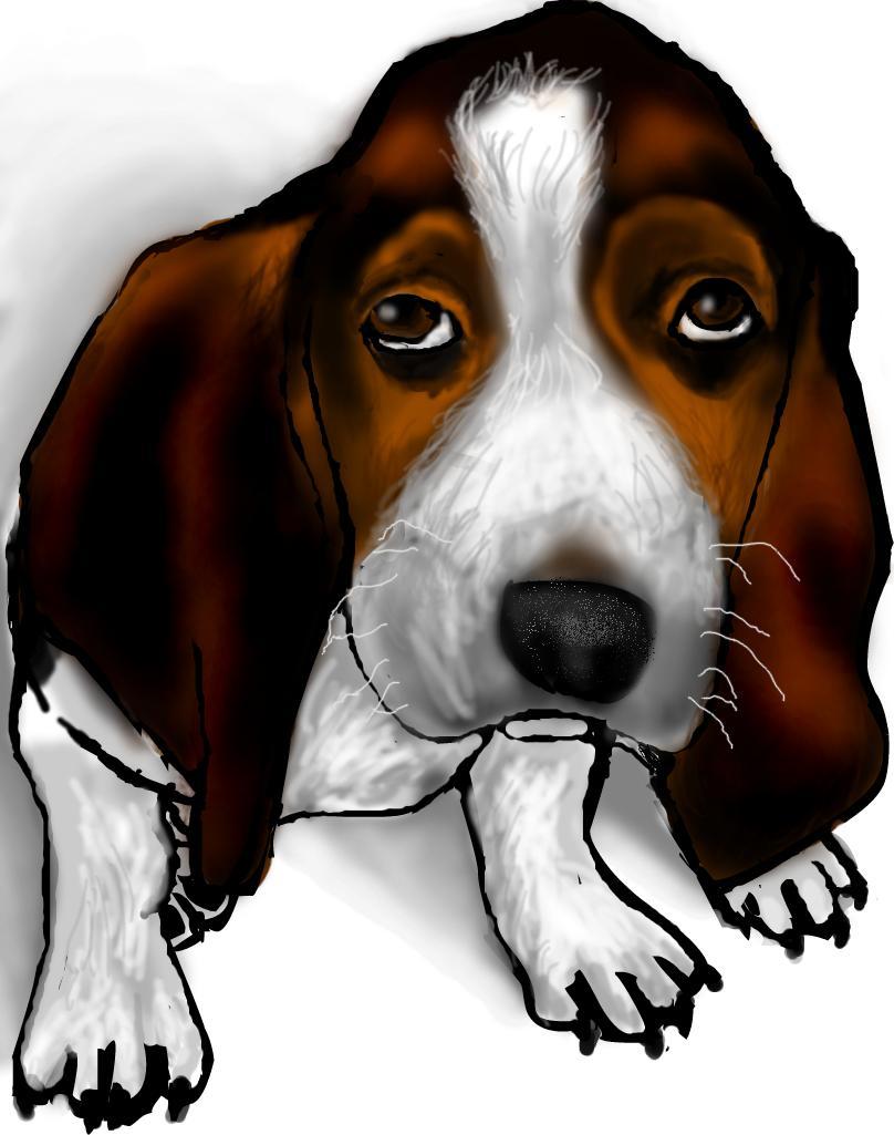 Basset Hound/Beagle ..