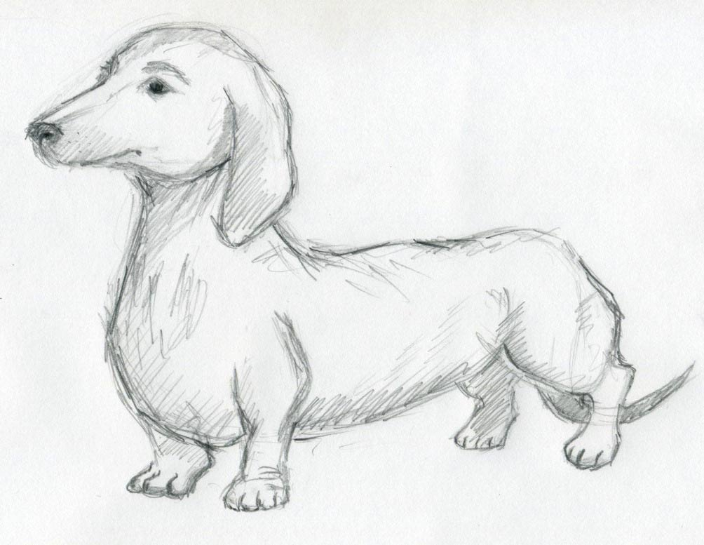 Wiener Dog Sketch Finished