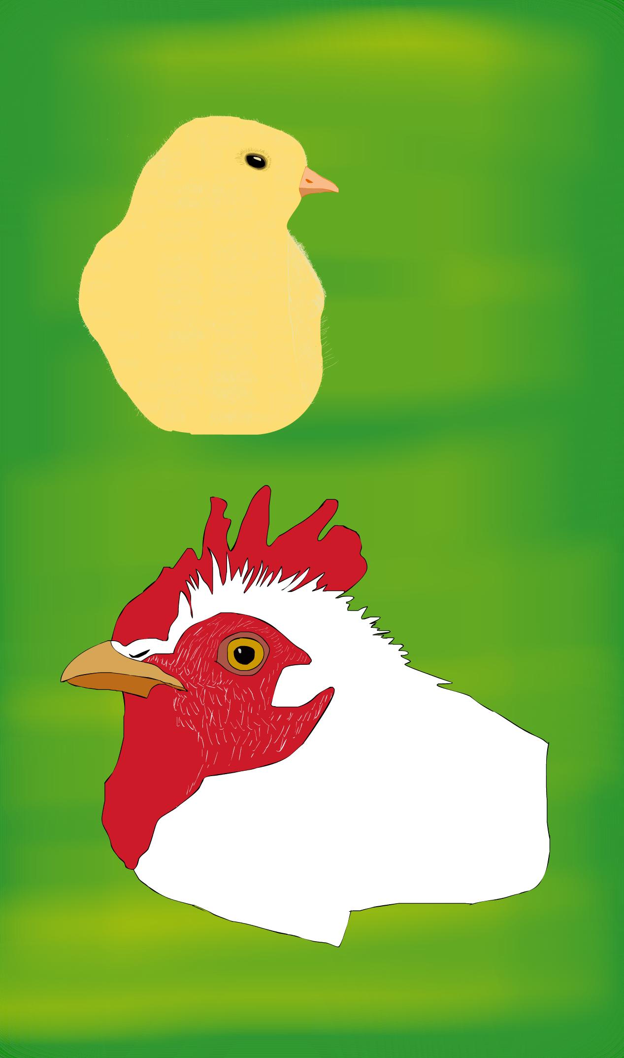 Chick & Chicken Past & Future