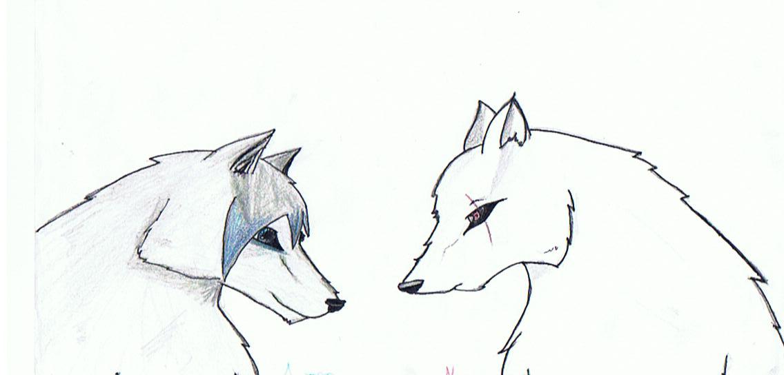wolf showdown!