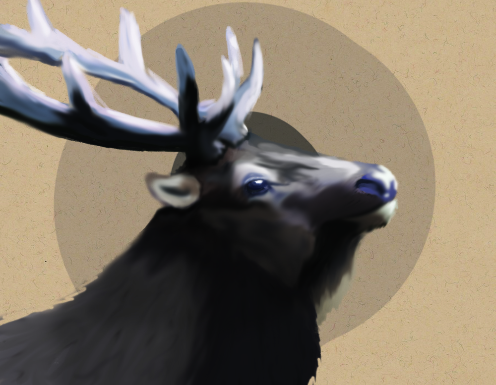 Circles & Elk