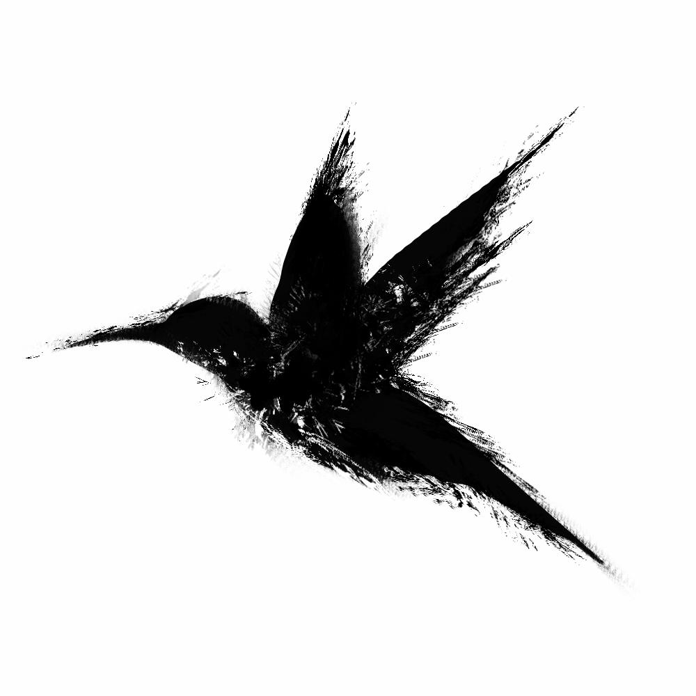 Thrixe colibri