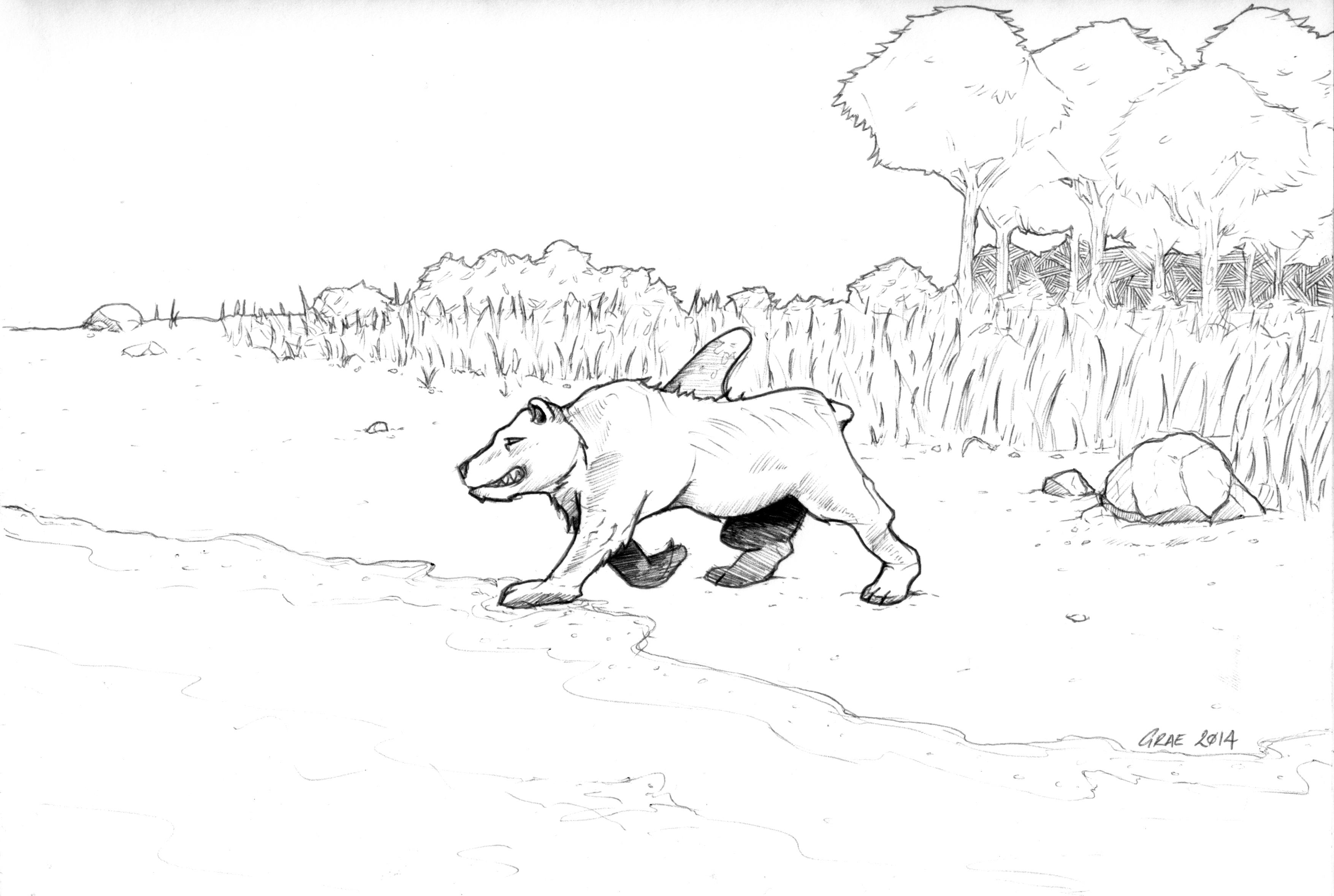 Bearshark goes for a swim