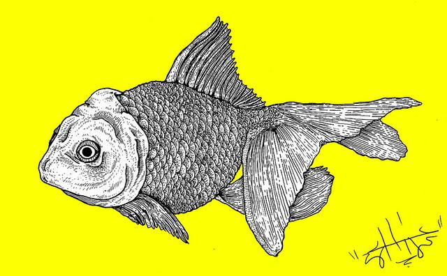 SAGGY FISH.