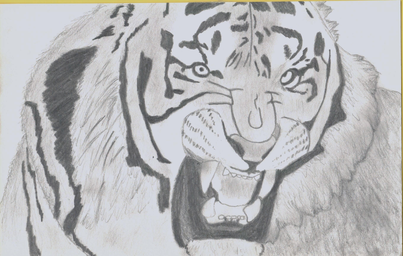 Tiger : D