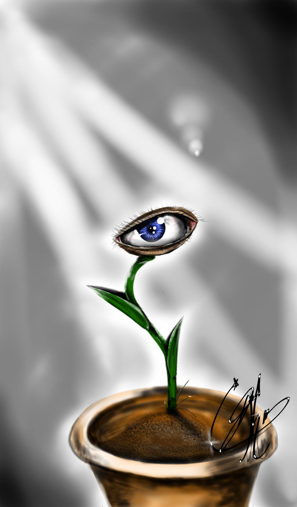 Venus Eye Trap